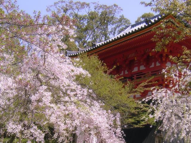 Kyoto 1day Highlight