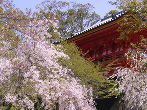 Spring Kyoto