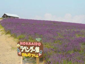 hokkaido-june-furano-image2